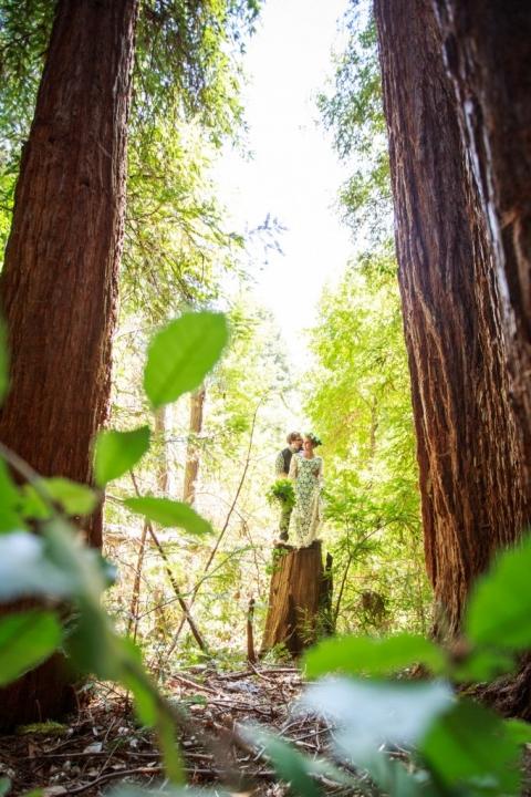 bride & groom on redwood stump